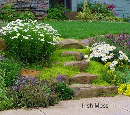 Irish moss from roberta 39 s unique gardens landscaping for Irish garden designs