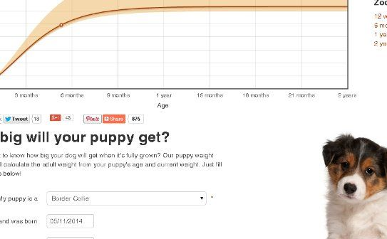 Border Collie Puppy Weight Chart Goldenacresdogs Com So You Want A Border Collie But You Don T Have A In 2020 Border Collie Puppies Border Collie Weight Border Collie
