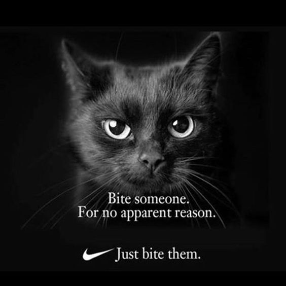 Funny Cat Memes Of The Day – 35 Pics Ep17 - Lovely Animals World #cat #catmemes #funnycat