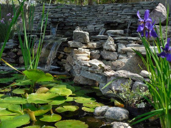 My frog enjoying the pond.