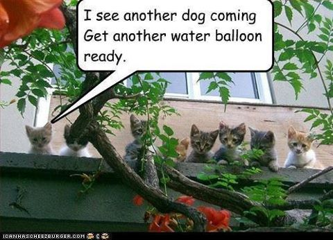 I See Another Dog Coming Get Another Water Balloon Ready Water - They gave this tiny dog some water balloons what happens next is hilarious