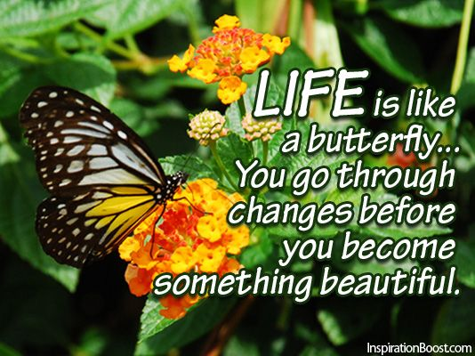 Life is like a Butterfly... You go through changes before you become something beautiful. <img src=