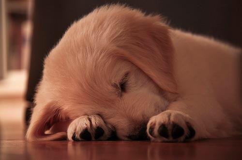I am sooooo tired