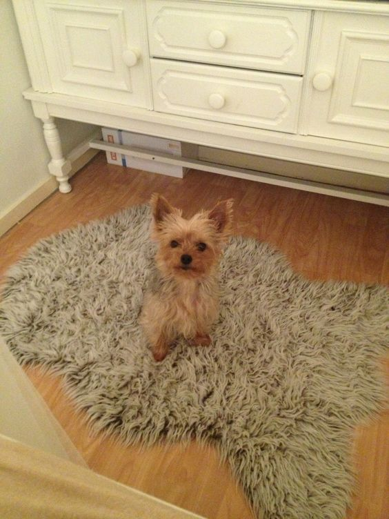 Milly love you yorkshire terrier