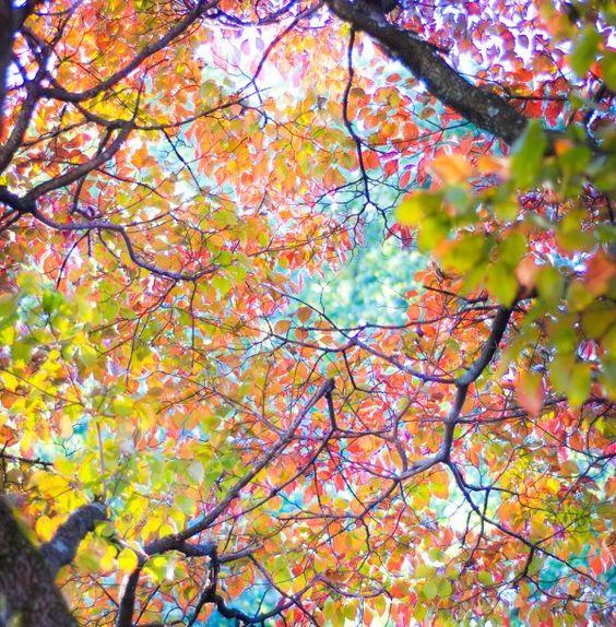 Tree canopy rainbow