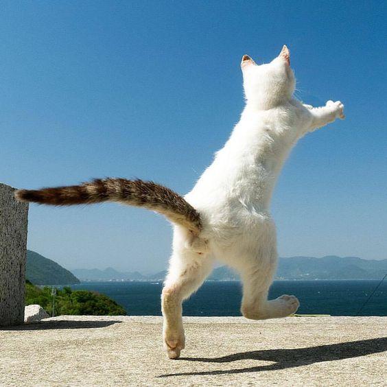 二足歩行する野良猫)