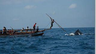 Festival Baleo : Berburu Ikan Paus di Lamelera