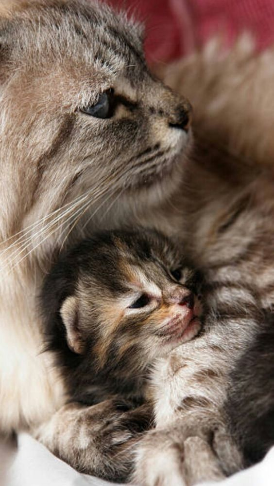 Mommy Cat And Her Adorable Kitten Snuggling Cats Cute Cats