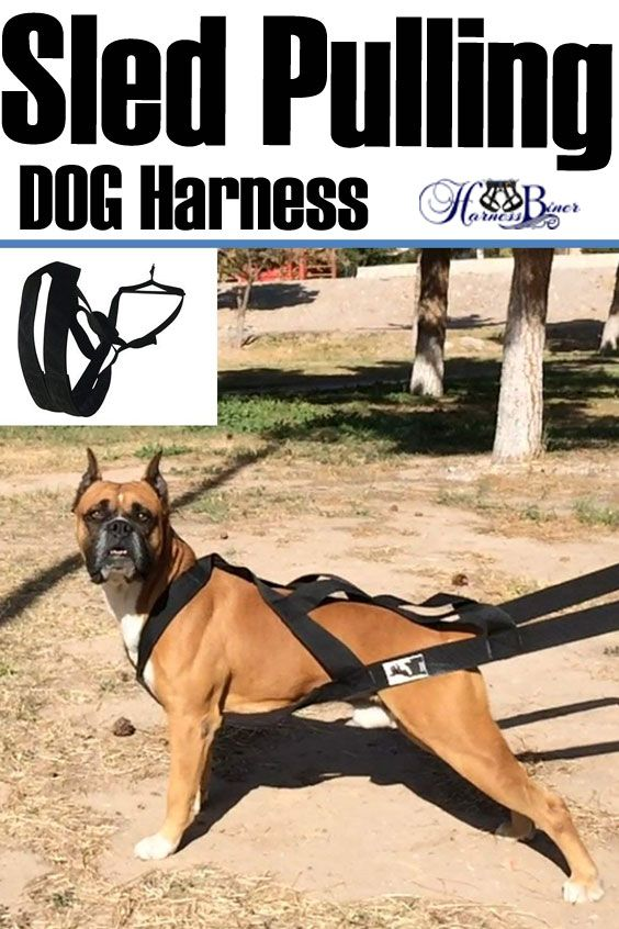 Weight Pulling Dog Harness Knk Dog Supplies Big Dog Harness Padded