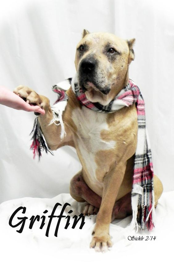 Petfinder.com is the world's largest database of adoptable pets and ...