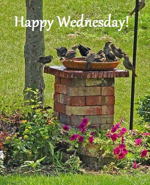 The birds are enjoying a Happy Wednesday....: