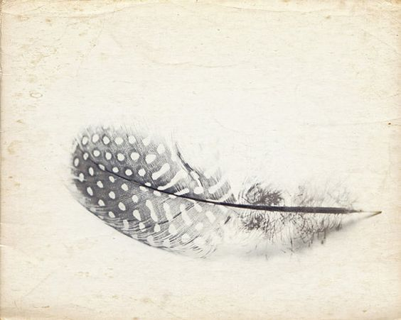 A Zen Series of Natural History Objects 8x 10 Fine Art Photograph $20.00