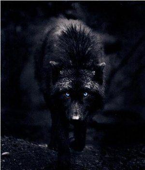 Jace's pet wolf Tyra. http://www.ilyonchronicles.com/: