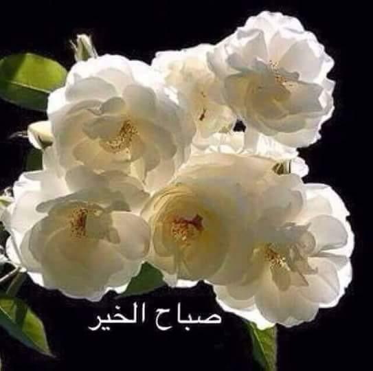 Pin By Emăn Amoon On صباحيات Good Morning Arabic Flowers Rose
