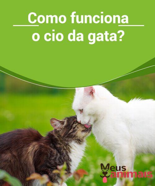 idioma felino é confiavel