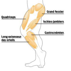 exercices pour étirer vos jambes: troncs, mollets, jumeaux, tendon d'achille, quadriceps, fessier, psoas-iliaque,ischio-jambier, adducteur, hanches et aines