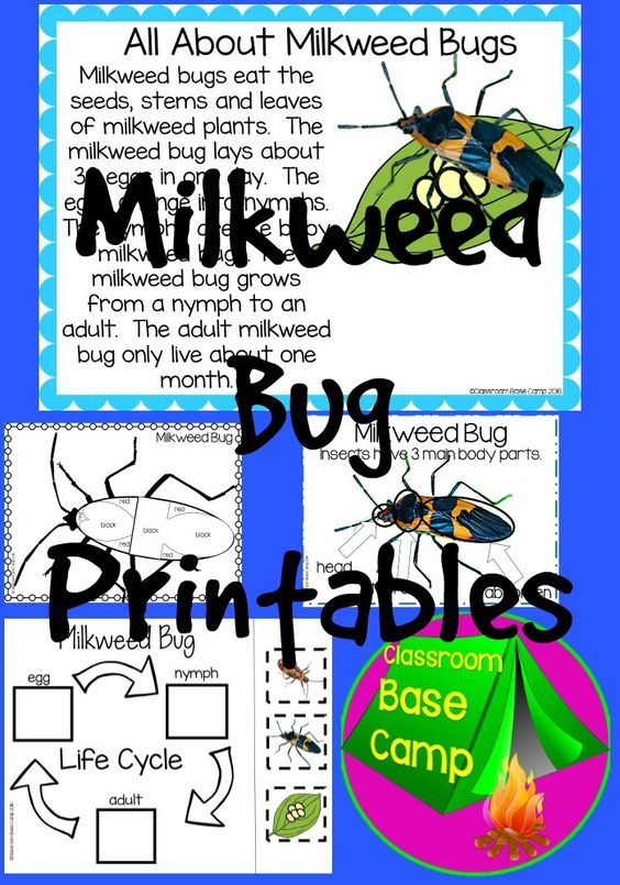 Milkweed Bugs | Pinterest | Activities, Plants and Body parts
