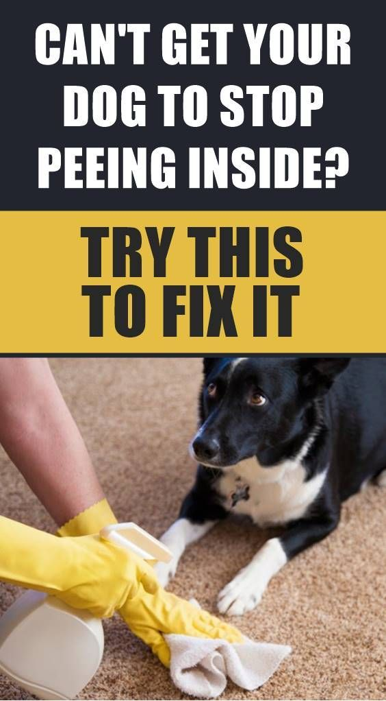 Do You Feel Like You Ve Tried Everything To Get Your Adult Dog To