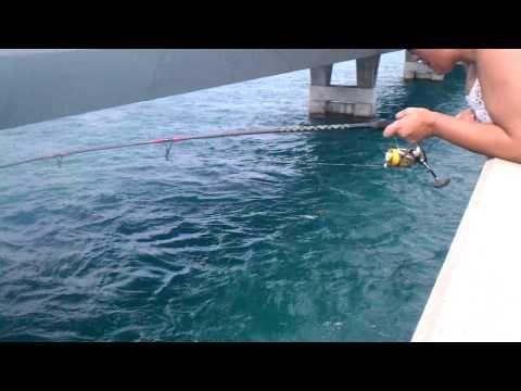 Watches florida and fishing on pinterest for Florida keys bridge fishing