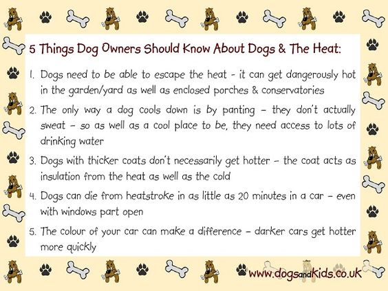 5 Things Dog Owners Should Know About Dogs & The Heat