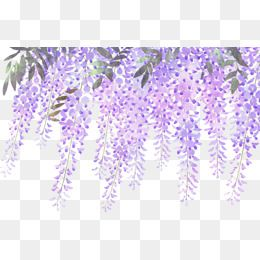 Wisteria Flower Lavender Flowers Hand Drawn Fresh Lavender Flowers Hand Drawn Fresh Painted Clipart Lavender Flower Png Images Free Watercolor Flowers Cool Art