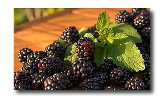Blackberry Sage Body Scrub Sugar or Salt Scrub by CedarCreekSoaps1, $9.75
