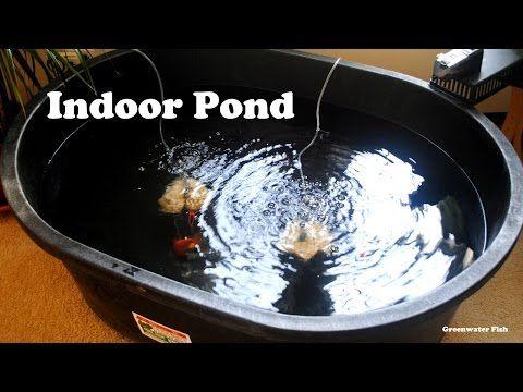 Goldfish Indoor Pond - YouTube