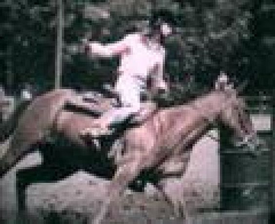 Ground work to Upper level training, Boarding, and Riding Lessons. www.dogtrotstables.weebly.com