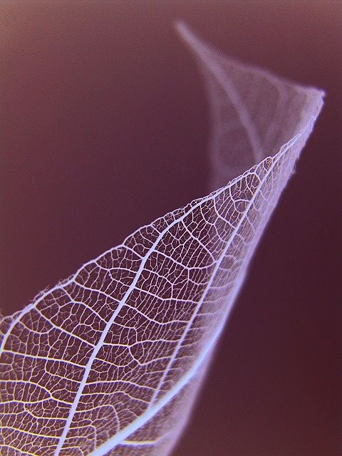 The veins of the leaf are a complex structure which look even more effective when white.:
