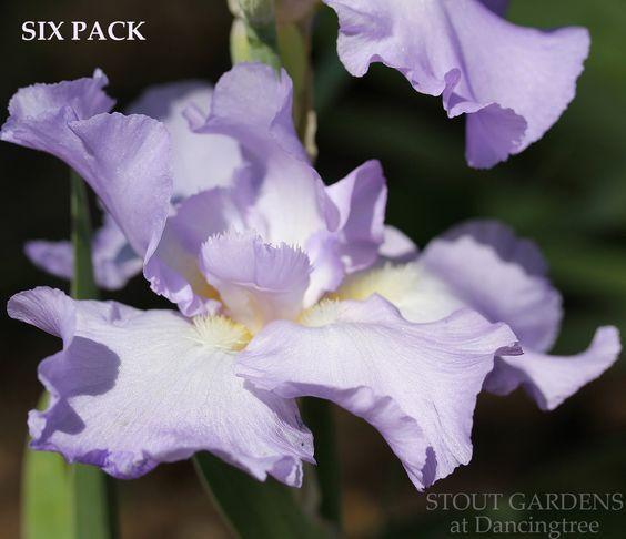 Iris SIX PACK