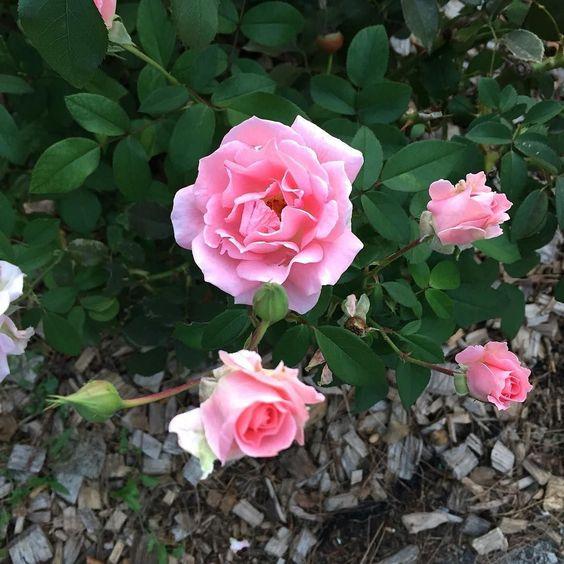 Buenas noches flores !  Que tengáis un muy buen inicio de semana. Nos leemos mañana.  . . #goodnight #bonanit #buenasnoches #ig_bcn #lifestyle