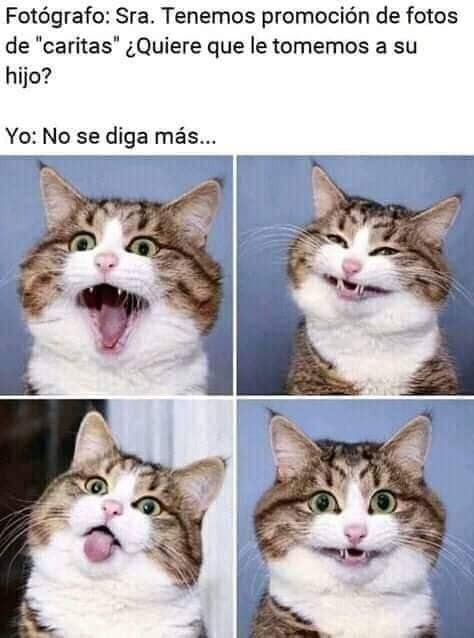 Follow Us Meme Memes Funny Andromedacomputer Www Andromedacomputer Net Instagram Https Memes De Animales Divertidos Memes Graciosos De Animales Meme Gato