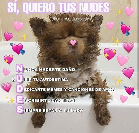 Memes Soft Memes Lindos Memes Espanol Graciosos Frases Perronas
