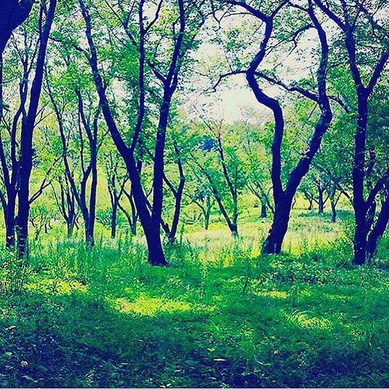 【yuuu_non_】さんのInstagramをピンしています。 《🌿 ** 今日は マイナスイオンの 癒し day ☺︎ ♥︎ ♥︎ ・ ・ ・ #ソラ #空 #そらふぉと #ソラが好き #ソラ部 #イマソラ #igで繋がる空 #森林 #自然 #大好き #sky #beatiful #nature #green #plants #love #instapic #mylife #instadiary #instalike #instagood #japan #japanese》