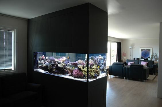 built in saltwater tank   ... me there is something about a peninsula tank that just cant be beat