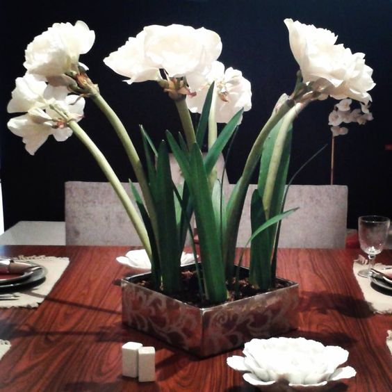 Centro de mesa de amarilis color blanco http www for Amarilis decoration