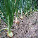 La temperatura de la tierra, clave para la germinación de las semillas   ECOagricultor