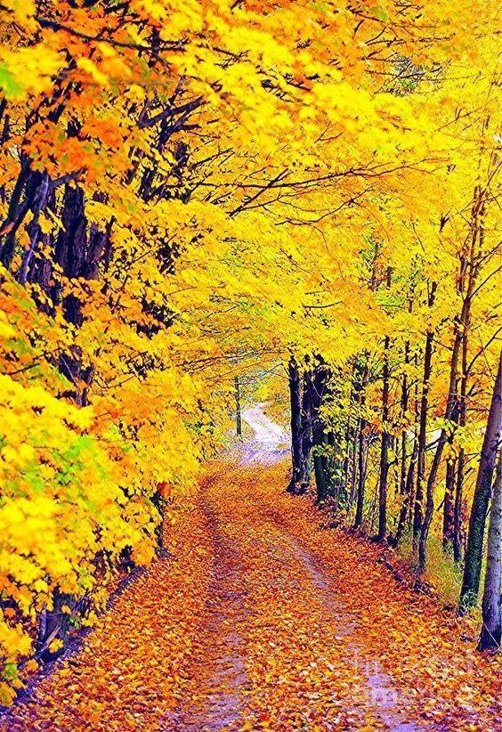 Картинки прекрасного осеннего дня бесплатно