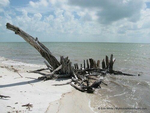 Natures Art - Driftwood