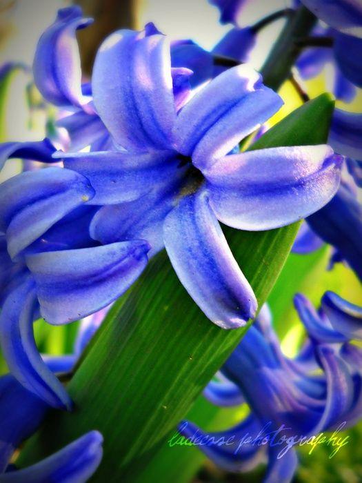 Blue Purple Please