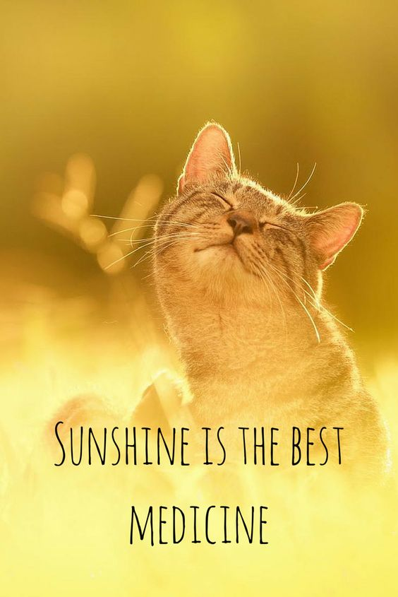 Sunshine is the best medicine.  Click on this image to see the most sophisticated collection of inspiring quotes!:
