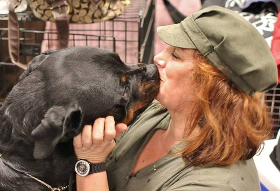 Pin By Kisholi Mendis On Rip Caleb Rottweiler Love Rottweiler Rottweiler Breed