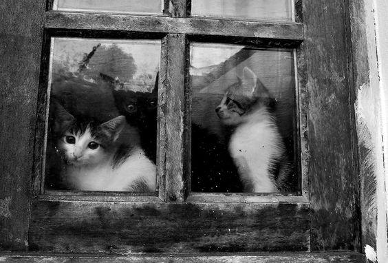 Katzen!