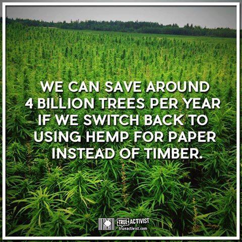 Hemp & Cannabis Explorers