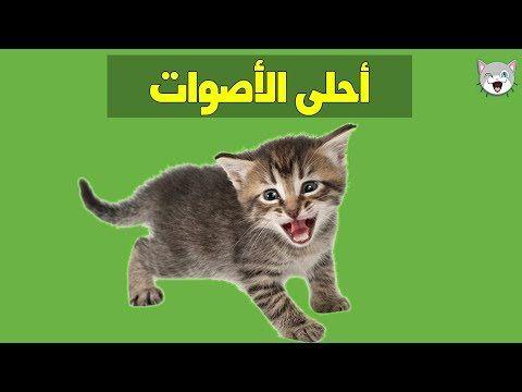 صوت القطط للأطفال الصغار Cute Baby Cats Baby Cats Cats