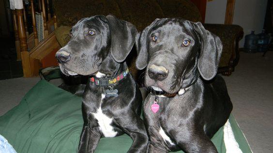 Evelynn and Finn - 5 months