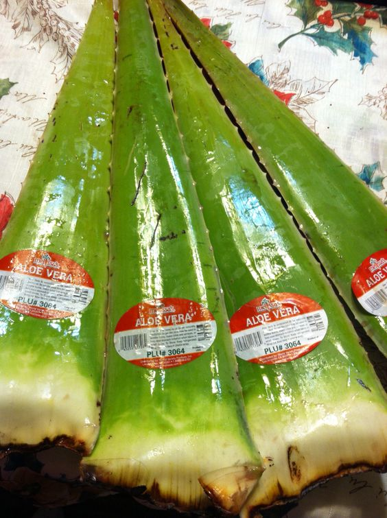 how to make aloe vera gel from plant