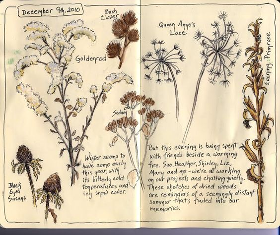 Sketching in Nature: New Contributor Introduction - Sandy