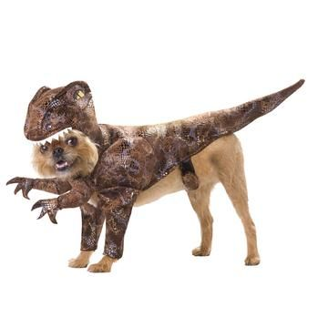 Dinosaur dog costume  @Jessie Fiest please tell me you saw this.