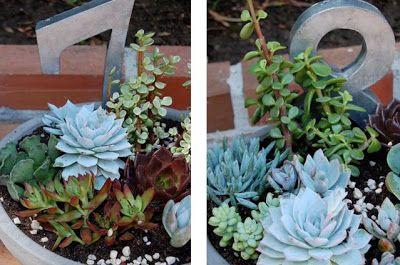 yes, please: our wedding: DIY succulent centerpieces + favors